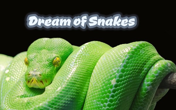 Dream of Snakes